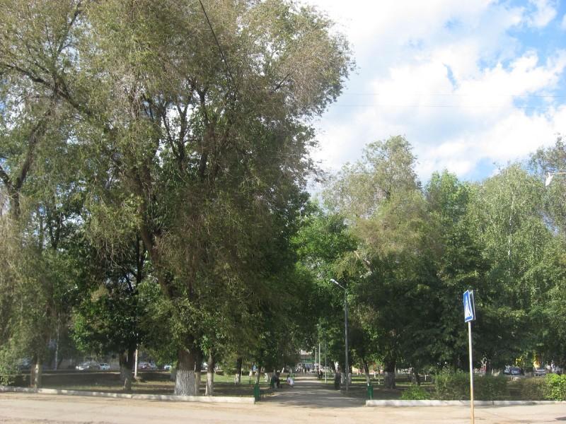 Сквер на Астраханской