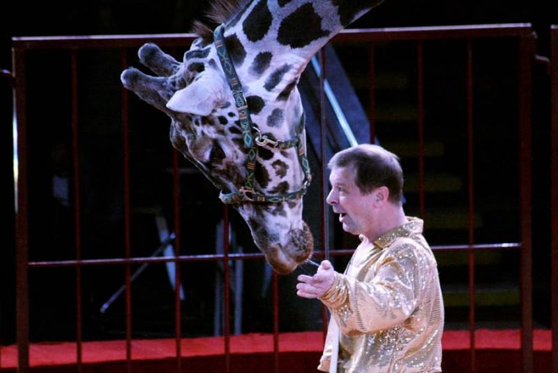 В Саратовский цирк приехал жираф