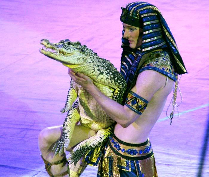 крокодил на арен