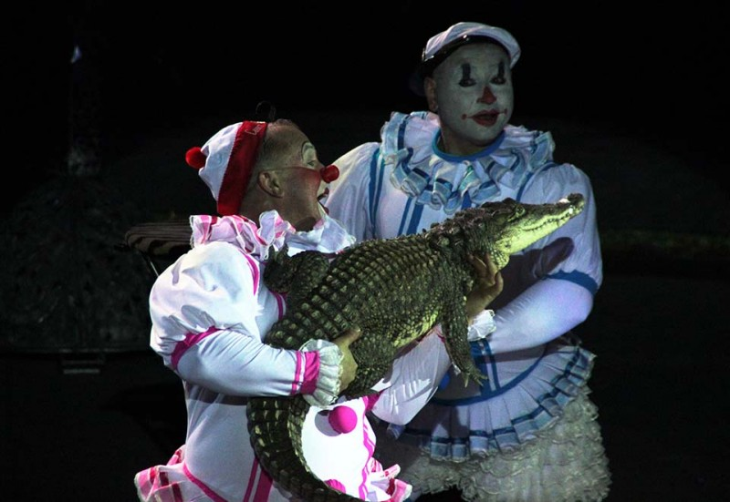 ДНИ СЕМЬИ от цирка «Джемелли» в Саратовском цирке!