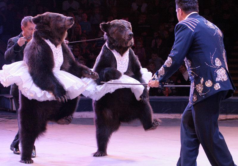 В цирке началась «Фиеста»