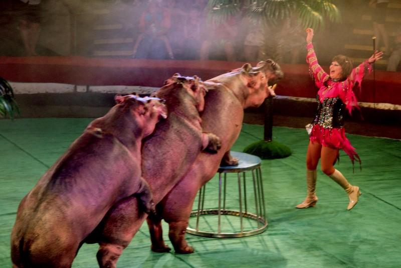 Шоу «Танцующие бегемоты»