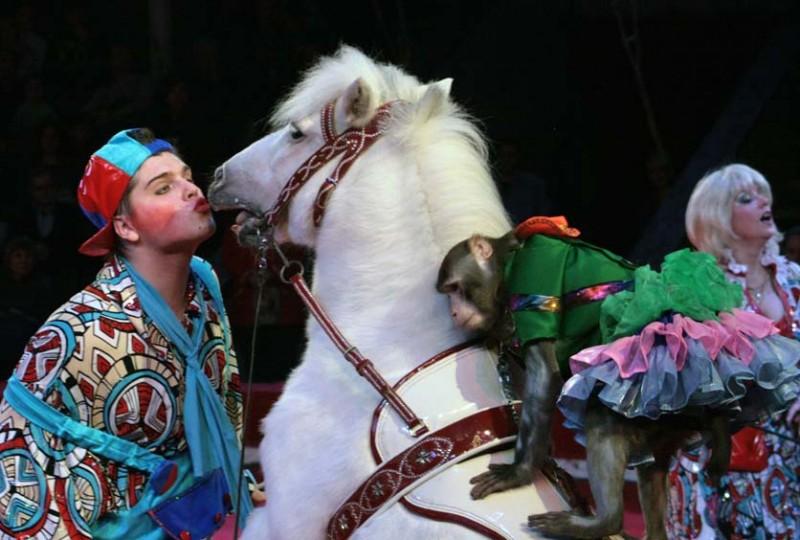 Филатовы-Клыковы в новой цирковой программе!