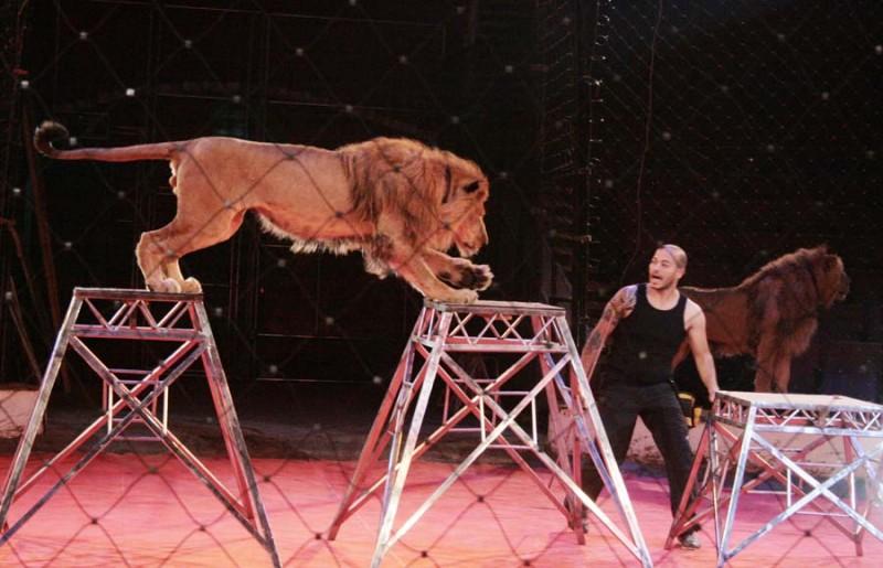Новый цирковой сезон открыл Национальный цирк Египта